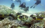 turtles diver.gili air