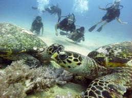 turtle kisses manta dive gili trawangan