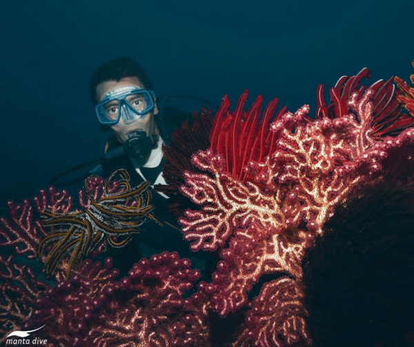 Diver with large fan coral