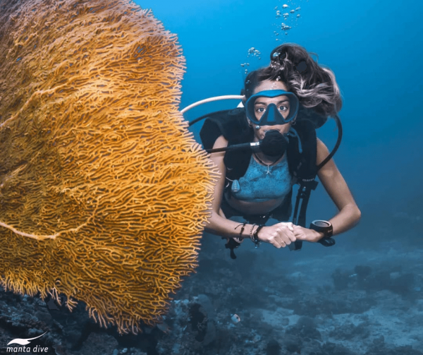 Female diver with large orange fan coral