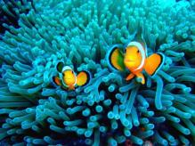 76 nemo diving gili trawangan2
