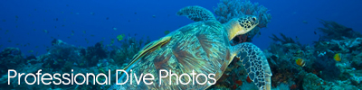professional dive photos new